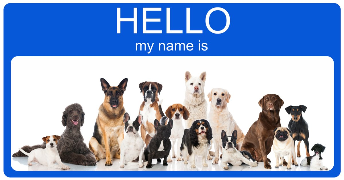Adopted Dog Names