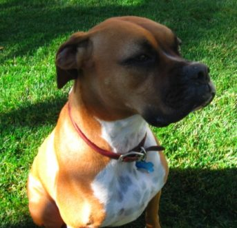 Top 10 ways to reduce your dog's carbon paw print