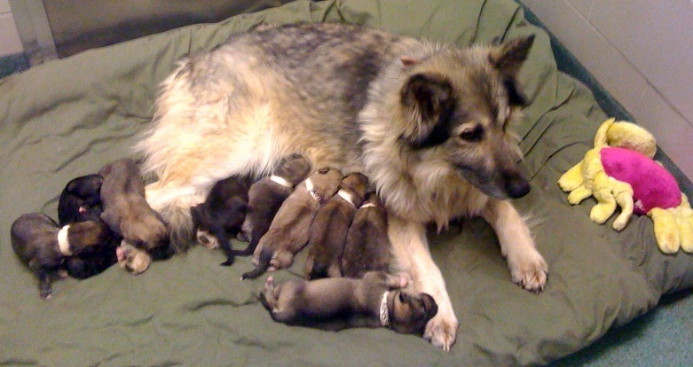Mother S Day For Dog Lovers 5 Great Ways To Honor Your