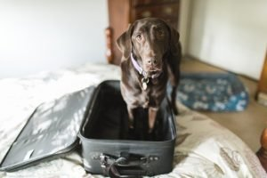 First Class Fido: Tips For Traveling With Your Dog