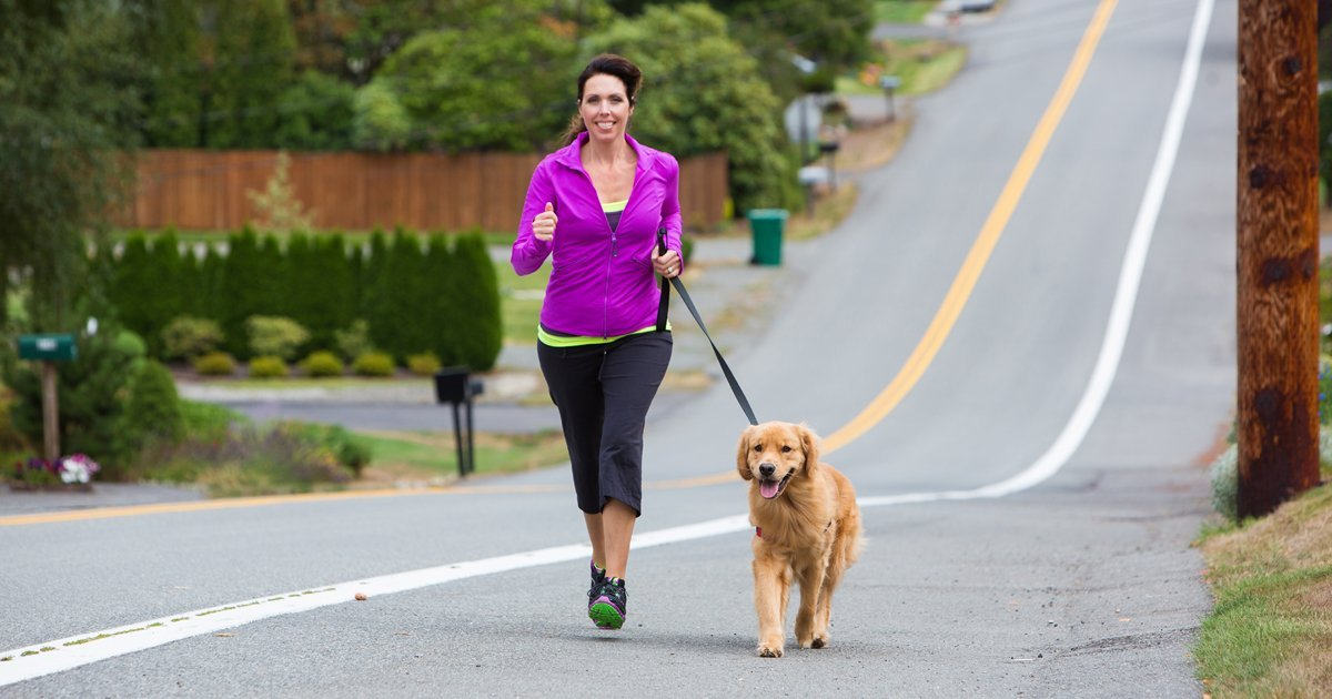 Why Dogs Need So Much Exercise