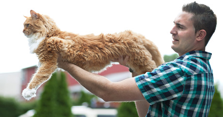 Cat Breeds Largest Smallest And Most Dog Like Dogtime