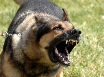 Is owner responsible when his dog barks?