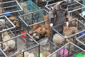 Mission possible: Dogs saved in China