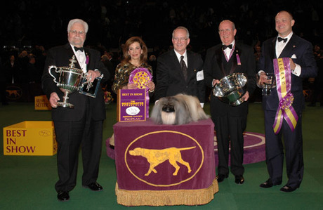 Pekingese is top dog at Westminster
