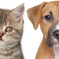 The 10 trendiest dog and cat names