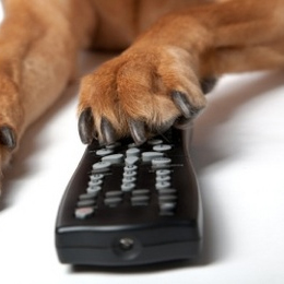 Five cat and dog videos for Friday, March 30, 2011