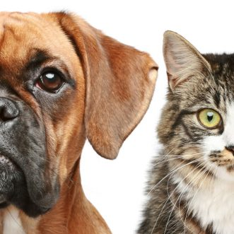Five cat and dog videos for Friday, April 13, 2012