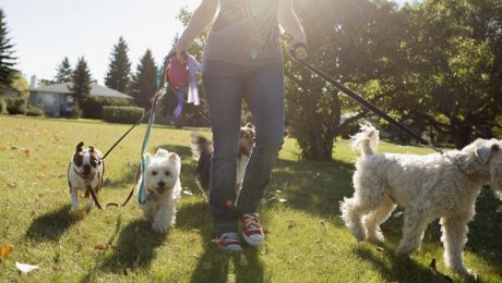 Doggy Daycare VS. Dog Walker VS. Pet Sitter: Which Is Best?