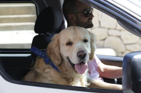 Driving With Dogs: Road Trip Tips