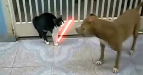 Dogs and cats in the Star Wars universe