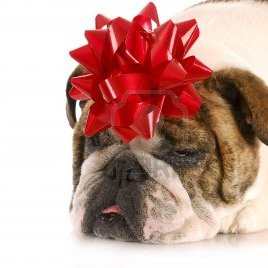 Gifts-for-dog-lovers product reviews