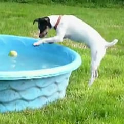 DogTime video of the week: Dog and tennis ball