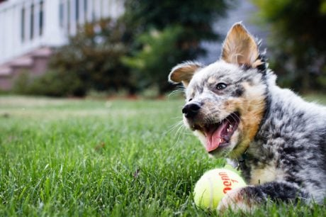 The Top 23 Smartest Dogs In The World