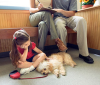 The 7 things pet owners do that drive veterinarians crazy