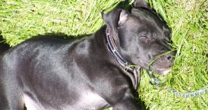 Belfast dog Lennox is dead