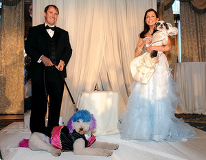 Most expensive dog wedding ever raises big bucks for NY shelter