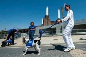 Olympic Torch passes London animal shelter