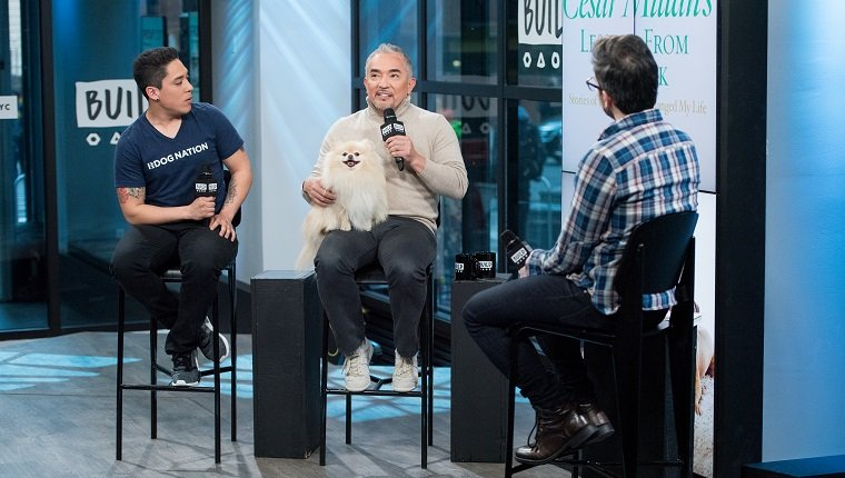 """NEW YORK, NY - FEBRUARY 17: TV prsonality Cesar Millan with his dog Benson and son Andrew Milan discuss """"Dog Nation"""" with the Build Series at Build Studio on February 17, 2017 in New York City. (Photo by Roy Rochlin/Getty Images)"""