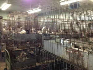 Over 250 Dogs Rescued From Ohio Puppy Mill Dogtime