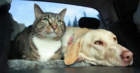 Road trip: 7 car safety tips for pets
