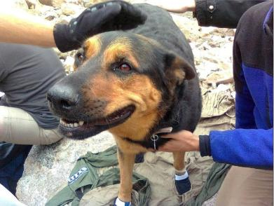 Owner of dog left on Colorado mountaintop wants rescuers to keep her
