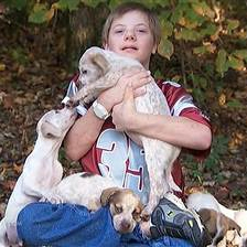 Puppies and their mother help rescue lost little boy