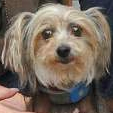 Little dog is lost, then found during Hurricane Sandy