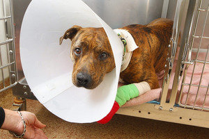 Man facing animal cruelty charge seeks to reclaim dog