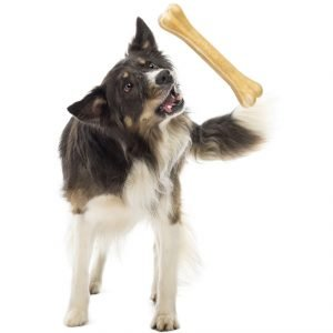 The science of choosing dog toys
