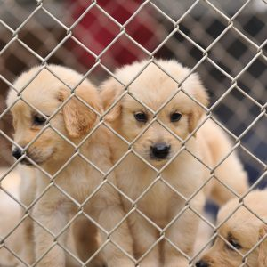 Ohio puppy mill bill passes House vote