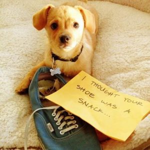 20 funny pictures of public dog shaming