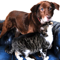 "Blind dog and ""Seeing Eye"" cat are inseparable"