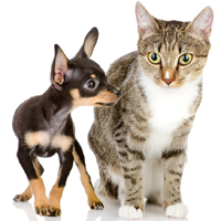 U.S. states with the most and fewest pet owners