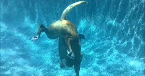 Deep-diving dog