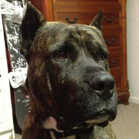 Army veteran needs your help to save his dog