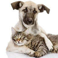 For Valentine's Day: 25 cute dog and cat pictures