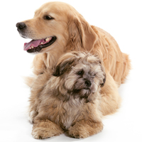 The 10 most popular mixed-breed dogs