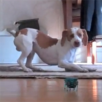 DogTime video of the week: March 1, 2013