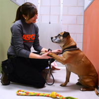 New rehab center to help victims of animal cruelty