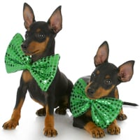 25 Cute Dog Pictures For St. Patrick's Day
