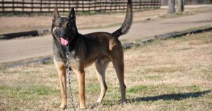 Trident K9 Warriors: The Navy SEALs of working dogs