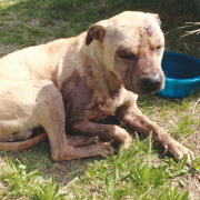 Community voices support for rescued bait dog