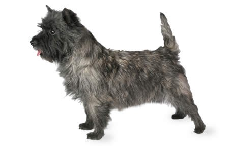 Top 10 Hypoallergenic Dogs Dogtime