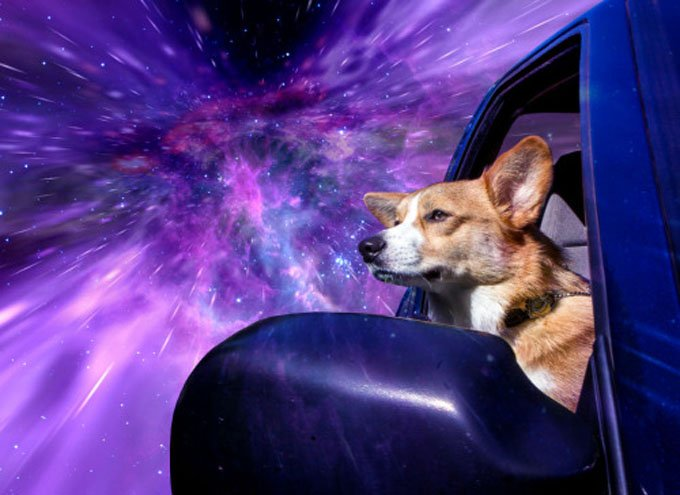 Each dog was photographed while sticking his head out of the window of a moving car. (Photo credit: Benjamin Grelle)