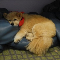 Therapy dog retires after 14 years