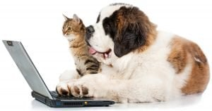 Ordering online: What's best for your pet?