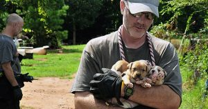 Over 350 dogs rescued in second-largest dogfighting bust in U.S. history