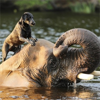 Dog and elephant are best buddies