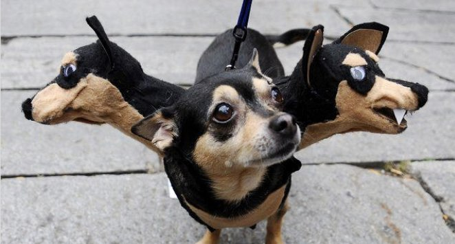 30 Awesome Dog And Cat Halloween Costumes - Dogtime